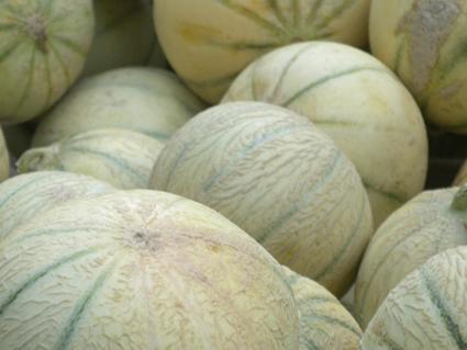 Comment choisir son melon fleur de menthe - Quand recolter les melons ...