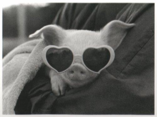 Mon amour de lunettes