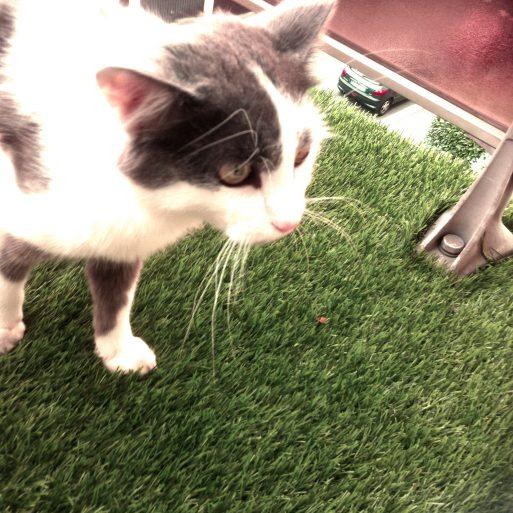 Vivre avec un chat agressif et qui perd ses poils fleur de menthe - Chat qui perd pas ses poils ...