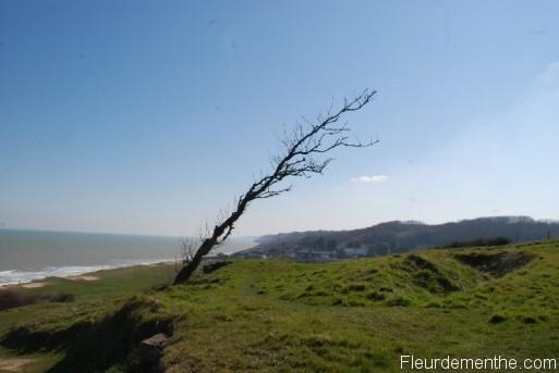 arbre falaise omaha