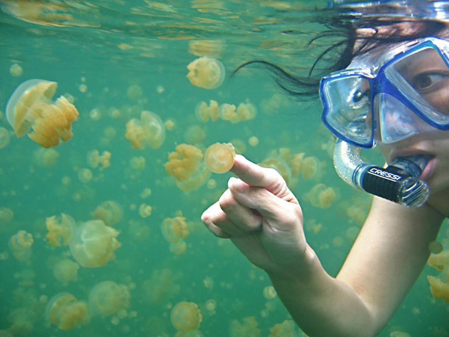 lac meduses