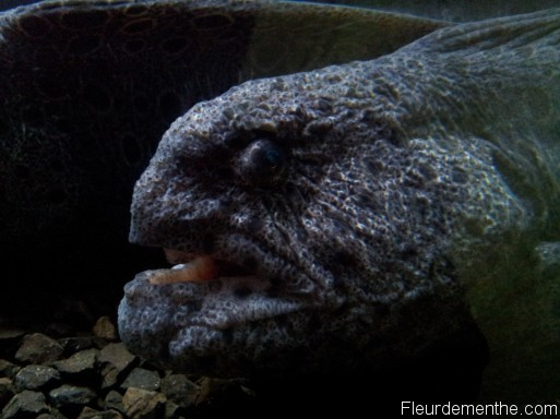 anguille loup nausicaa