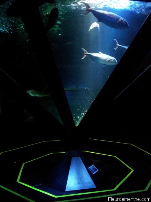 aquarium futuriste nausicaa