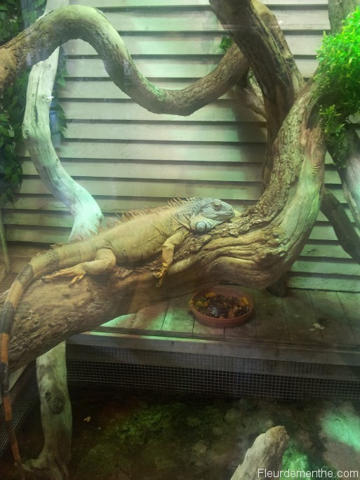 iguane nausicaa