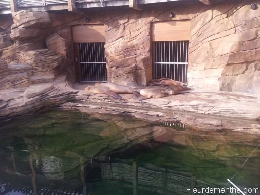 lions de mer nausicaa