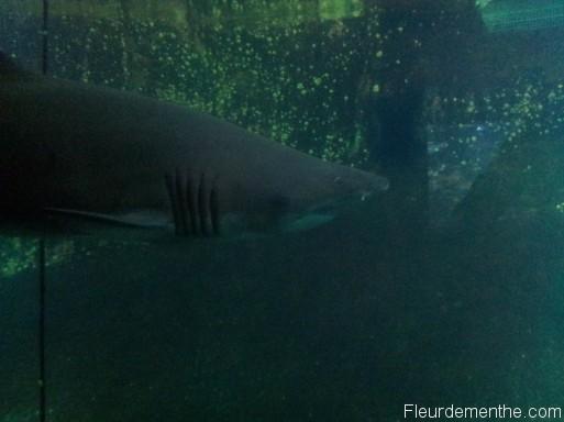 requin nausicaa