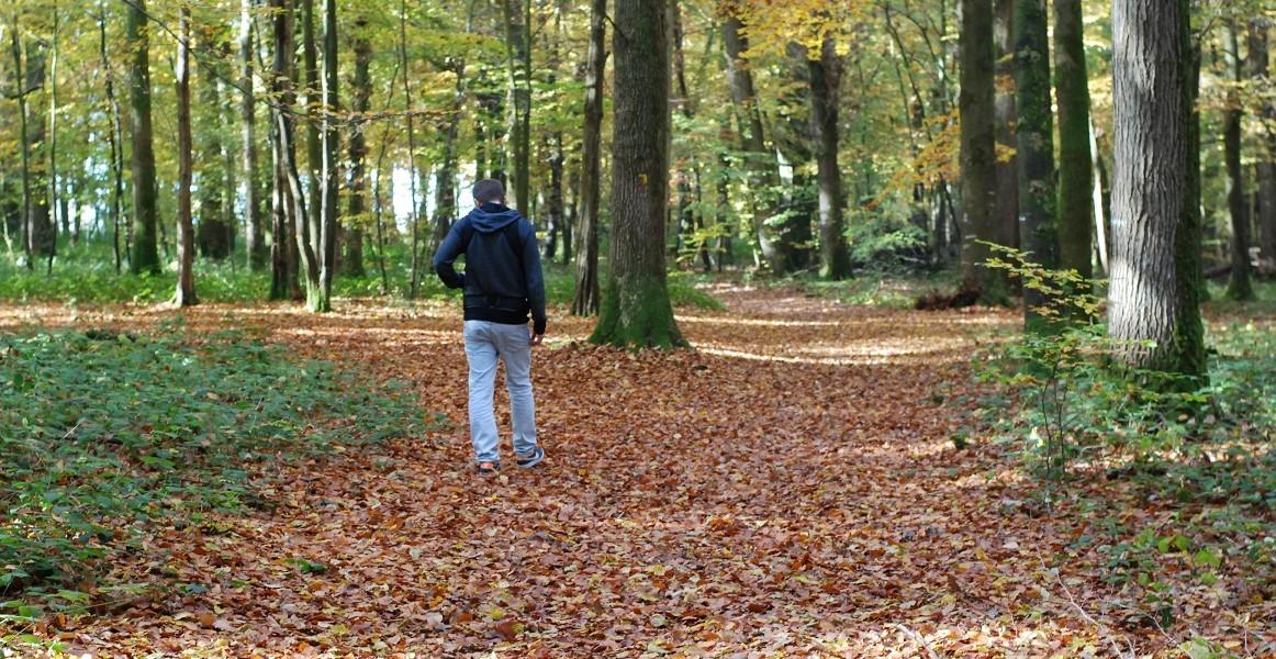 Une forêt en Novembre