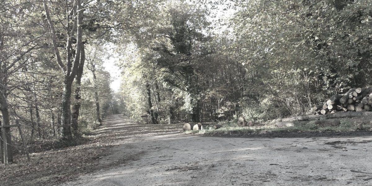 Forêt d'octobre